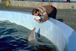 Dolphin+stretcher